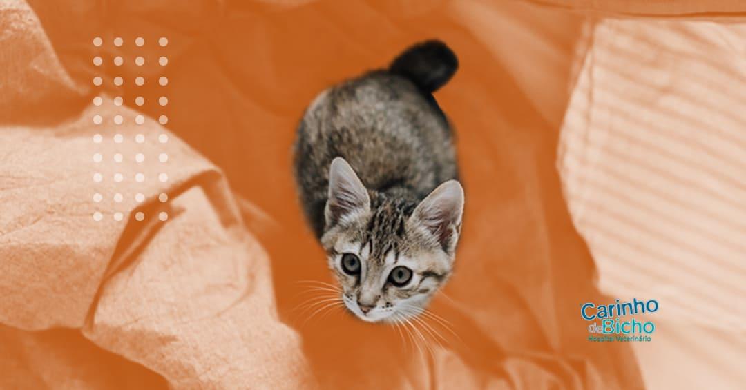 Olhares do gato: quais são e como cuidar?