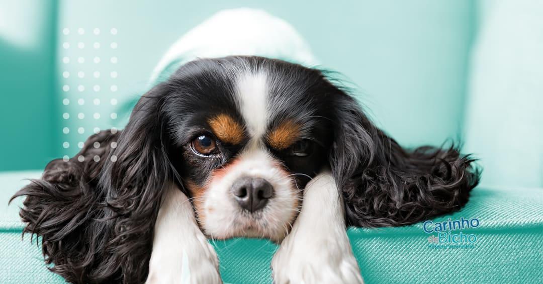 Internação animal: saiba quais são os cuidados necessários
